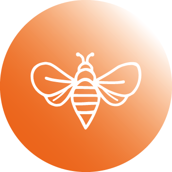 Artenschutz - Biene